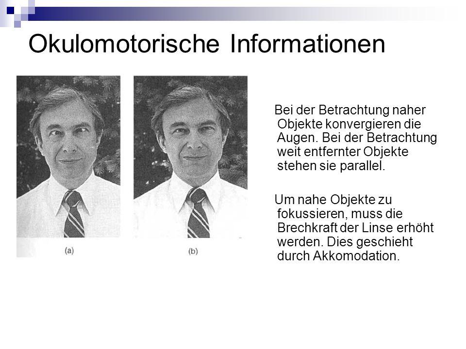 = binokulare Tiefeninformation (beide Augen sind beteiligt) Bild linkes Auge + Bild rechtes Auge = Stereopsis/ Stereosehen a.