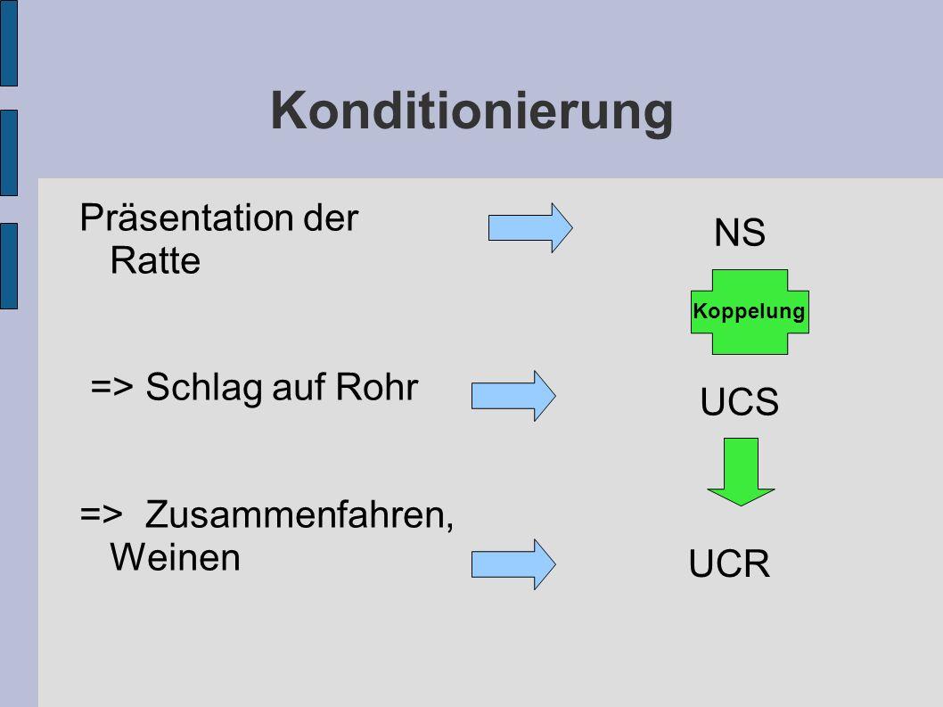 Konditionierung Präsentation der Ratte => Schlag auf Rohr => Zusammenfahren, Weinen NS UCS Koppelung UCR