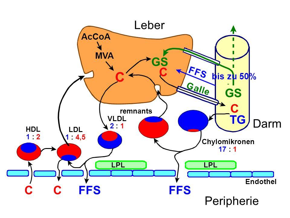 LPL Endothel Peripherie Leber Chylomikronen 17:1 FFS remnants C VLDL 2:1 FFS C LDL 1:4,5 C HDL 1:2 AcCoA MVA GS C bis zu 50% TG Darm C