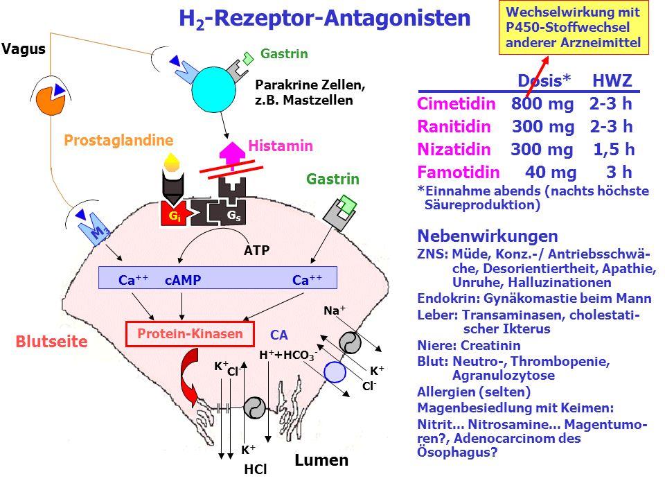 Blutseite Lumen K+K+ Cl - HCl K+K+ Na + K+K+ H+H+ Cl - +HCO 3 - H 2 -Rezeptor-Antagonisten GsGs GiGi CA Vagus Gastrin M3M3 Protein-Kinasen ATP Ca ++ c