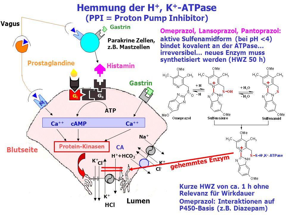 Blutseite Lumen K+K+ Cl - HCl K+K+ Na + K+K+ H+H+ Cl - +HCO 3 - Hemmung der H +, K + -ATPase (PPI = Proton Pump Inhibitor) GsGs GiGi CA Vagus Gastrin