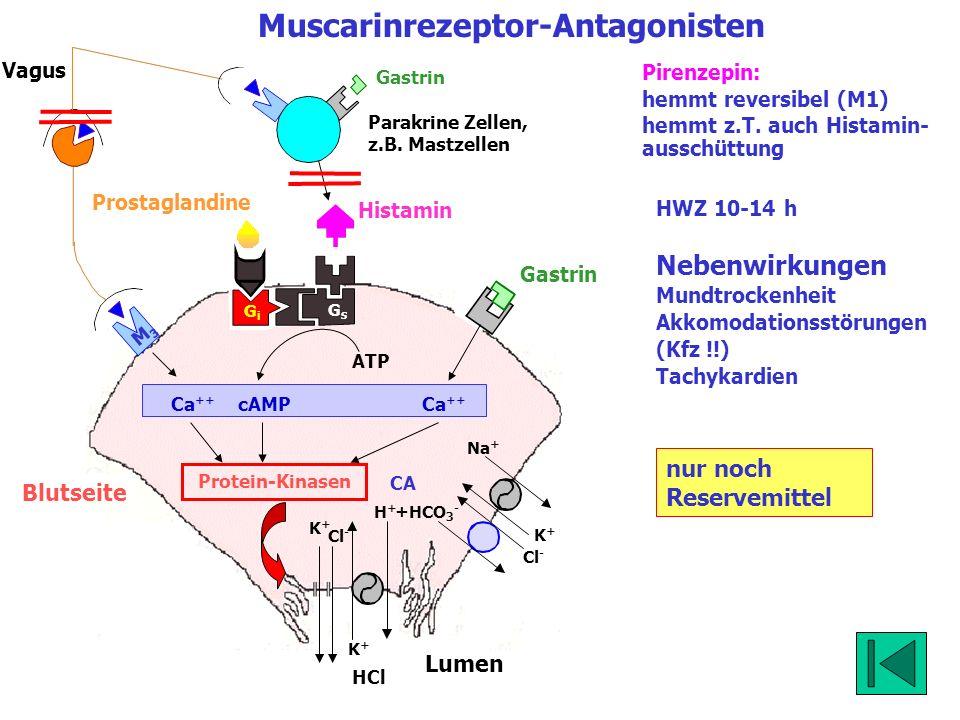 Blutseite Lumen K+K+ Cl - HCl K+K+ Na + K+K+ H+H+ Cl - +HCO 3 - Muscarinrezeptor-Antagonisten GsGs GiGi CA Vagus Gastrin M3M3 Protein-Kinasen ATP Ca +