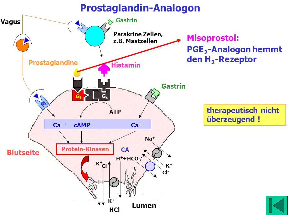 Blutseite Lumen K+K+ Cl - HCl K+K+ Na + K+K+ H+H+ Cl - +HCO 3 - Prostaglandin-Analogon GsGs GiGi CA Vagus Gastrin M3M3 Protein-Kinasen ATP Ca ++ cAMP