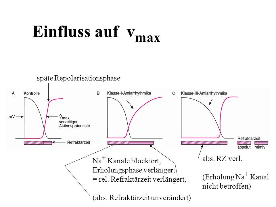 Einfluss auf v max Na + Kanäle blockiert, Erholungsphase verlängert = rel. Refraktärzeit verlängert, (abs. Refraktärzeit unverändert) abs. RZ verl. (E