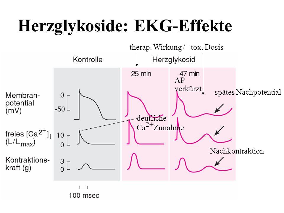 Herzglykoside: EKG-Effekte therap. Wirkung / tox. Dosis deutliche Ca 2+ Zunahme Nachkontraktion spätes Nachpotential AP verkürzt