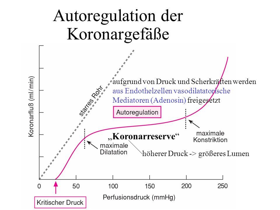 Autoregulation der Koronargefäße aufgrund von Druck und Scherkräften werden aus Endothelzellen vasodilatatorische Mediatoren (Adenosin) freigesetzt Ko
