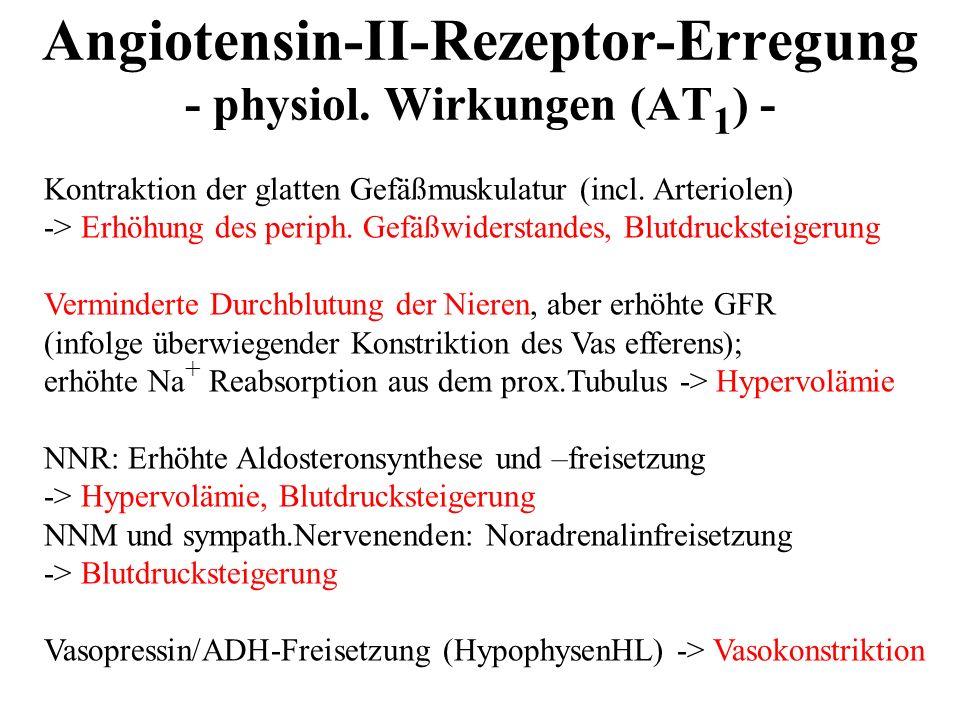 Angiotensin-II-Rezeptor-Erregung - physiol. Wirkungen (AT 1 ) - Kontraktion der glatten Gefäßmuskulatur (incl. Arteriolen) -> Erhöhung des periph. Gef