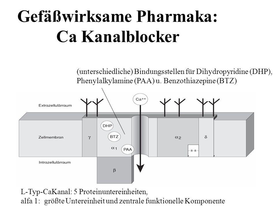 Gefäßwirksame Pharmaka: Ca Kanalblocker L-Typ-CaKanal: 5 Proteinuntereinheiten, alfa 1: größte Untereinheit und zentrale funktionelle Komponente (unte