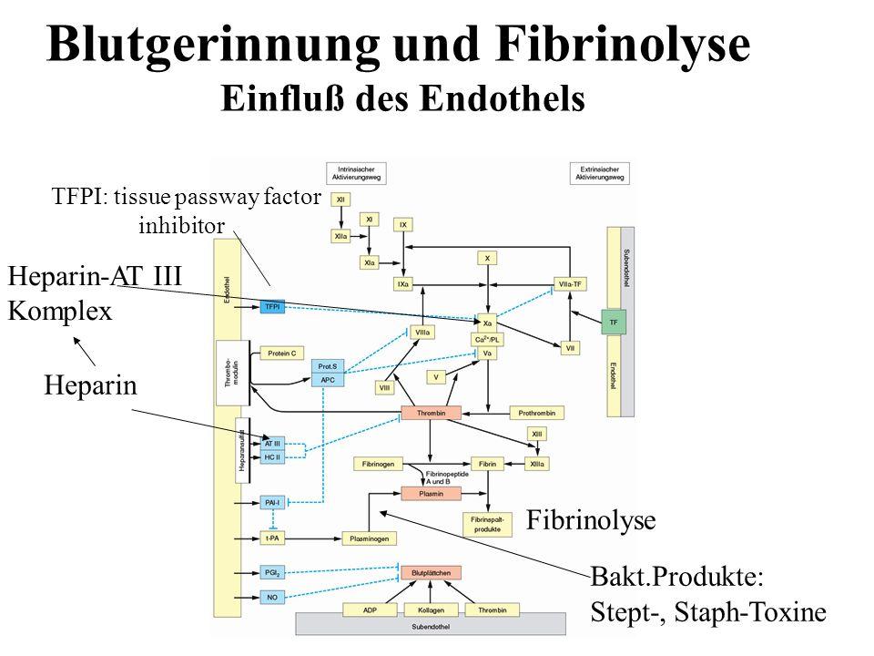 Blutgerinnung und Fibrinolyse Einfluß des Endothels Heparin TFPI: tissue passway factor inhibitor Bakt.Produkte: Stept-, Staph-Toxine Heparin-AT III K