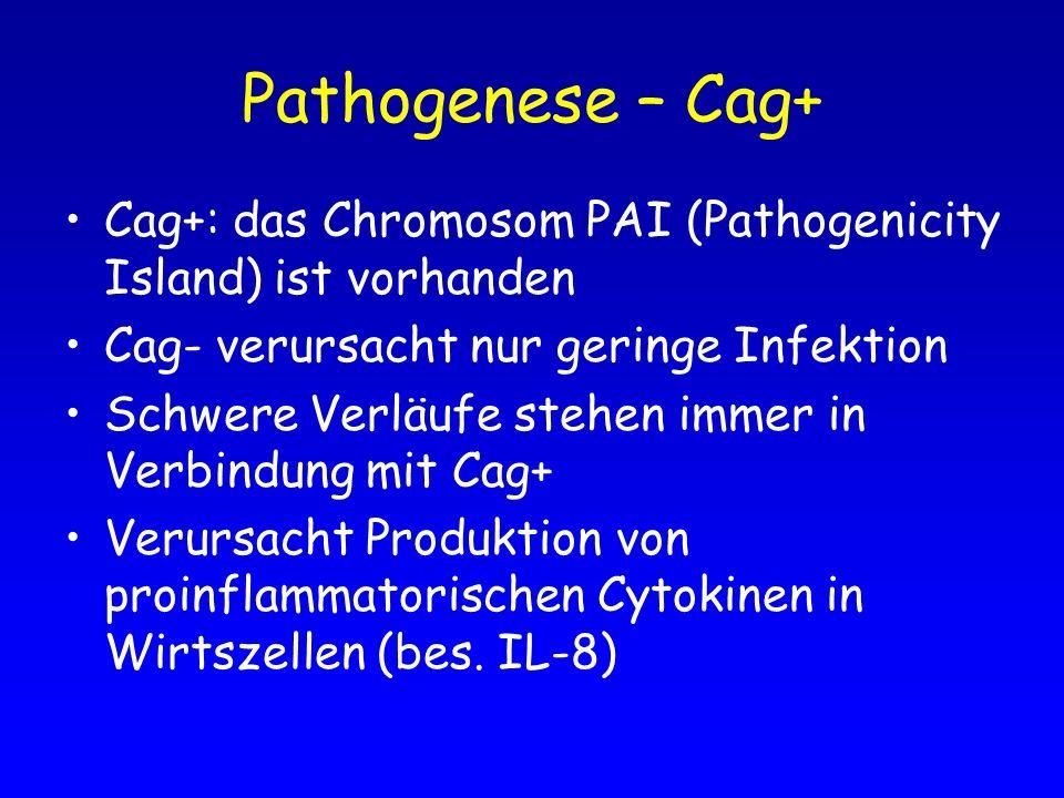 Pathogenese – Cag+ Cag+: das Chromosom PAI (Pathogenicity Island) ist vorhanden Cag- verursacht nur geringe Infektion Schwere Verläufe stehen immer in