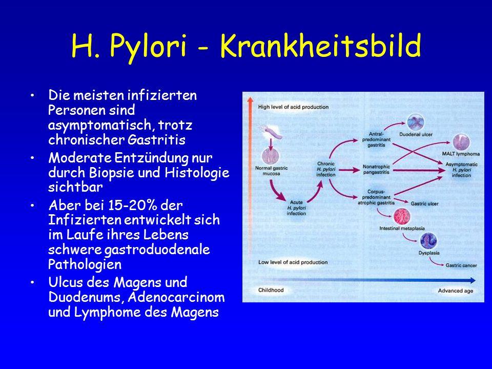 H. Pylori - Krankheitsbild Die meisten infizierten Personen sind asymptomatisch, trotz chronischer Gastritis Moderate Entzündung nur durch Biopsie und