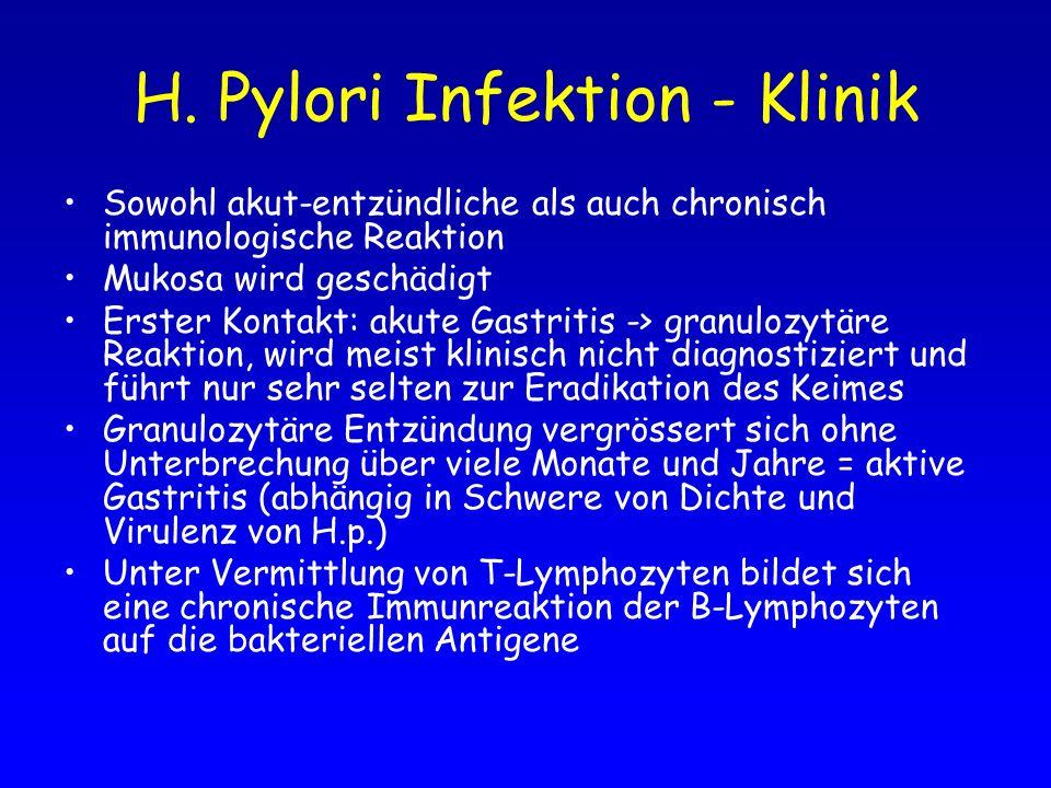 H. Pylori Infektion - Klinik Sowohl akut-entzündliche als auch chronisch immunologische Reaktion Mukosa wird geschädigt Erster Kontakt: akute Gastriti