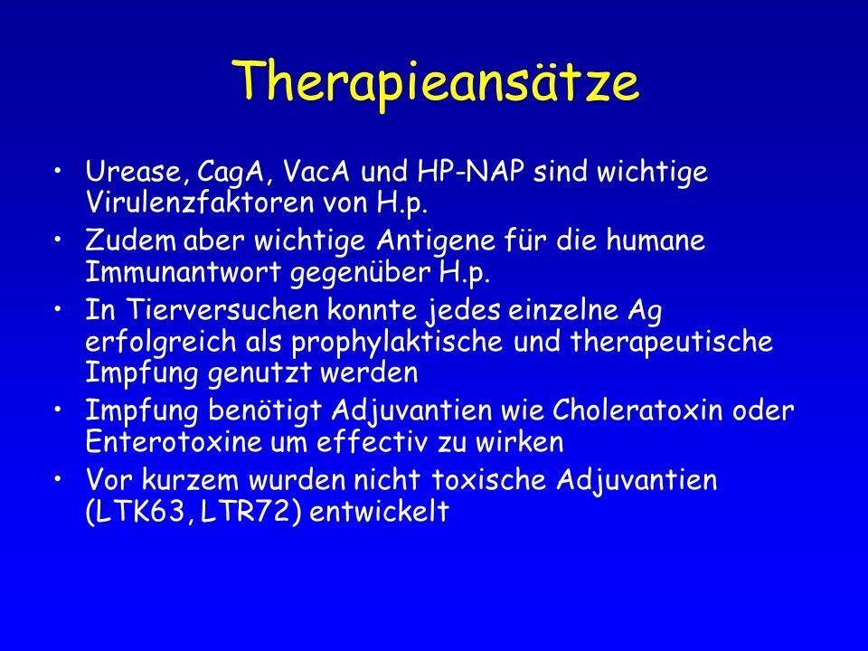 Therapieansätze Urease, CagA, VacA und HP-NAP sind wichtige Virulenzfaktoren von H.p. Zudem aber wichtige Antigene für die humane Immunantwort gegenüb