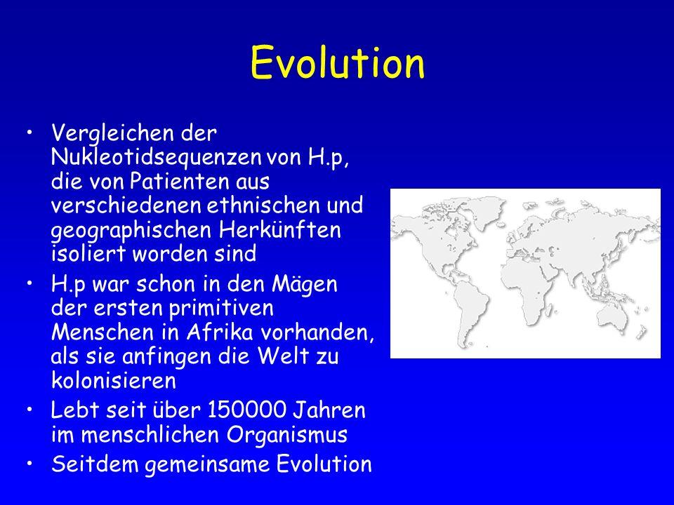 Evolution Vergleichen der Nukleotidsequenzen von H.p, die von Patienten aus verschiedenen ethnischen und geographischen Herkünften isoliert worden sin