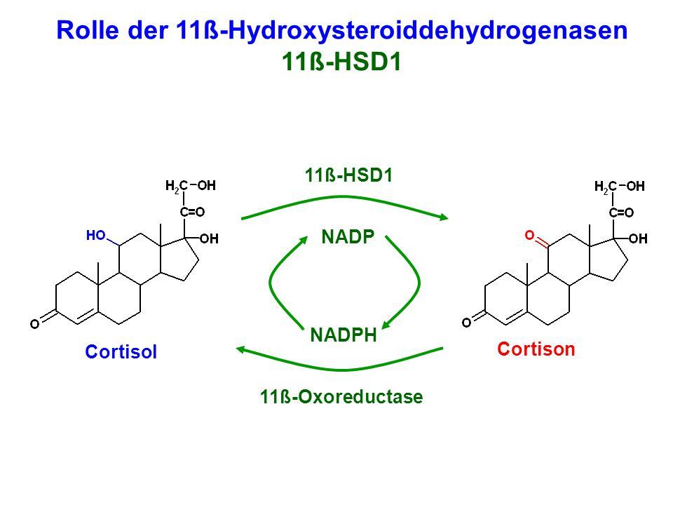 Cortisol Cortison NADPH NADP Rolle der 11ß-Hydroxysteroiddehydrogenasen 11ß-HSD1 11ß-Oxoreductase