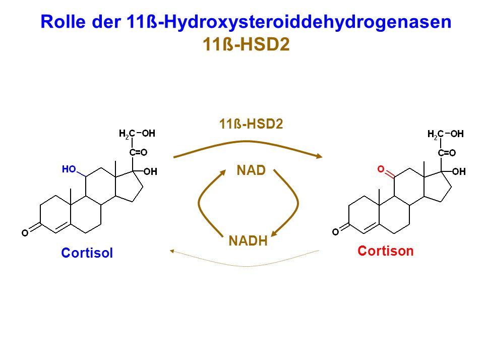 Cortisol Cortison NADH NAD Rolle der 11ß-Hydroxysteroiddehydrogenasen 11ß-HSD2