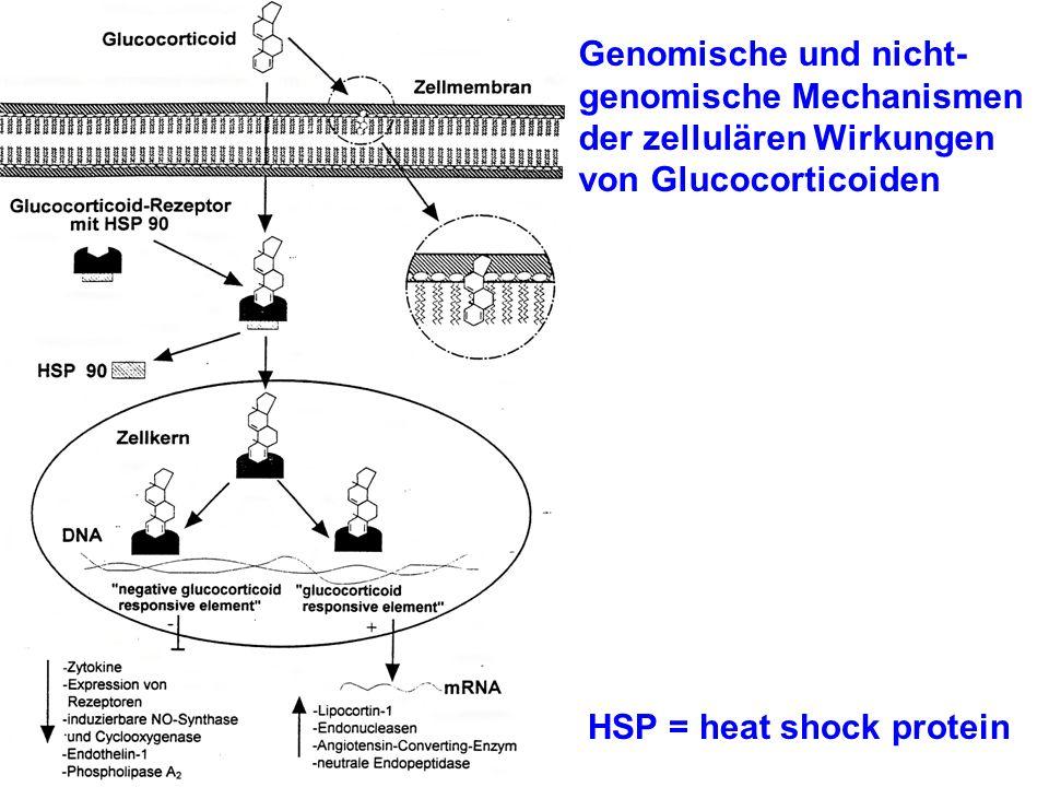 Genomische und nicht- genomische Mechanismen der zellulären Wirkungen von Glucocorticoiden HSP = heat shock protein