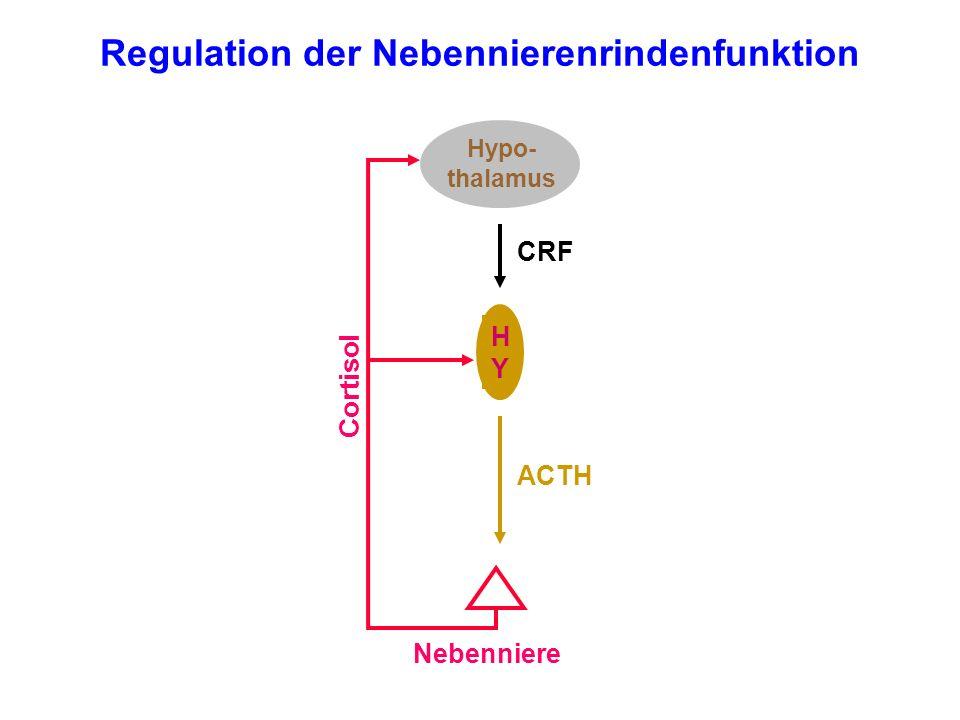 Regulation der Nebennierenrindenfunktion Hypo- thalamus HYHY Nebenniere Cortisol ACTH CRF
