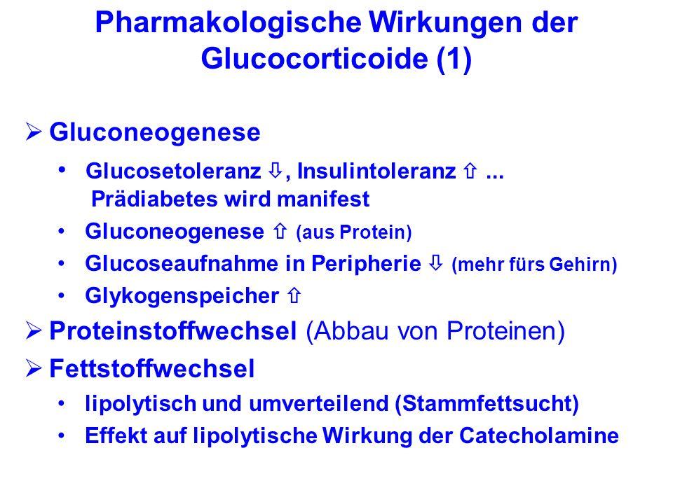 Pharmakologische Wirkungen der Glucocorticoide (1) Gluconeogenese Glucosetoleranz, Insulintoleranz... Prädiabetes wird manifest Gluconeogenese (aus Pr