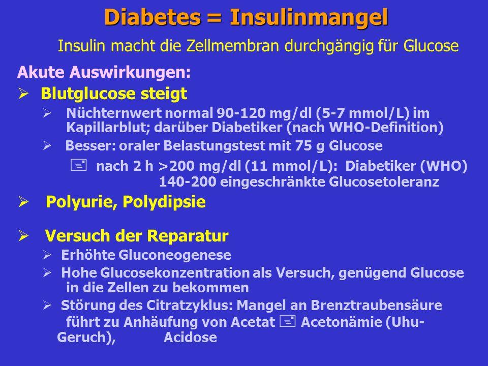 Diabetes: Typen Typ 1 = juveniler Diabetes Insulin produzierende B-Zellen des Pankreas sterben völlig ab A: immunologisch vermittelt B: idiopathisch Typ 2 = Altersdiabetes Zunehmende Einschränkung der Insulinproduktion periphere Insulintoleranz Häufig adipöse Patienten Typ 2a: normal oder untergewichtig (10-20%) Typ 2b: übergewichtig (80-90%) Keine Ketoacidose