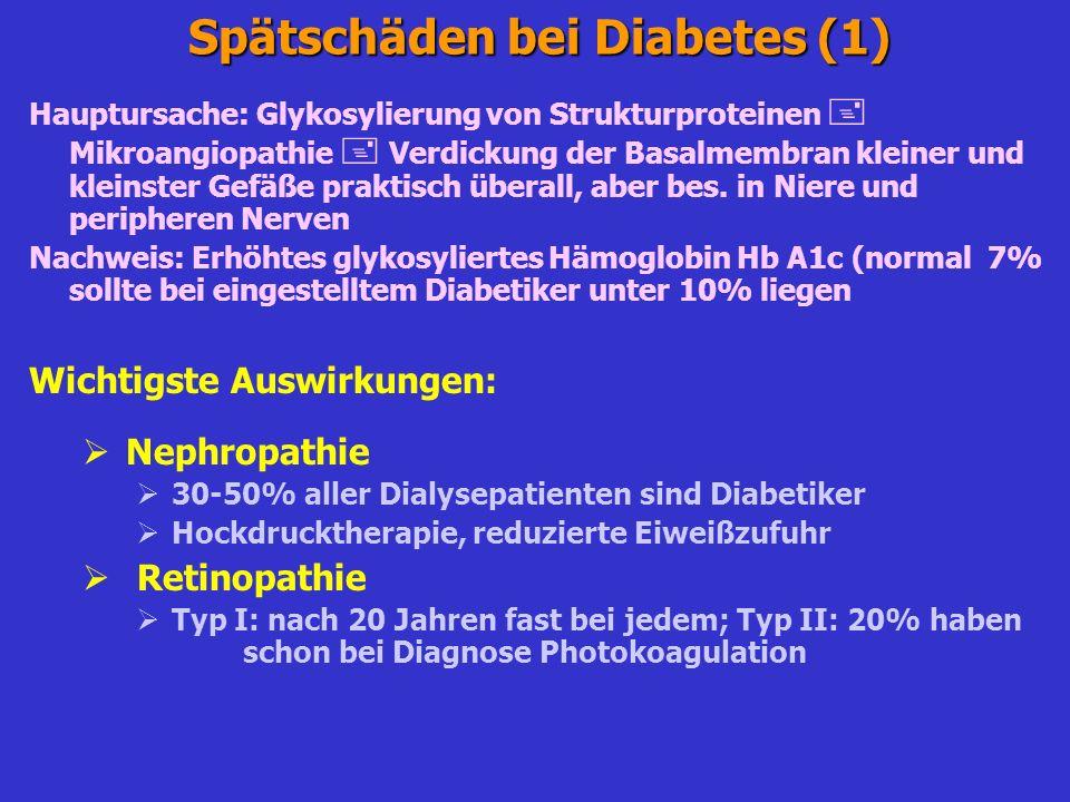 Biguanide Metformin (Phenformin, Buformin vom Markt wegen Lactacidosegefahr) hemmt ATP-Generation in den Mitochondrien energieabhängig Glucoseresorption im Dünndarm gehemmt verzögerte postprandiale Glucoseresorption auch starke Hemmung der Glucosefreisetzung in der Leber Förderung der Glucoseaufnahme in der Peripherie mit Erhöhung der Glucosetransporter Vorteile (Metformin) Blutzuckersenkung ohne Hyperinsulinämie Abschwächung der Insulinresistenz Keine Hypoglykämiegefahr Günstiger Effekt auf Fettstoffwechsel (Senkung der Triglyceride) Anorexigener Effekt hilft weitere Gewichtszunahme zu verhindern Angioprotektive Effekte Praktisch keine Lactacidose-Gefahr, wenn Kontraindikationen berücksichtigt Nachteile (Metformin) Kontraindikationen (Niereninsuffizienz, hohes Lebensalter, anoxische Zustände) Bei höherer Dosierung häufig gastrointestinaler Nebenwirkungen (Dosisreduktion bis Absetzen erforderlich Lactacidose bei totaler Missachtung der Kontraindikationen (Niereninsuffizienz!)