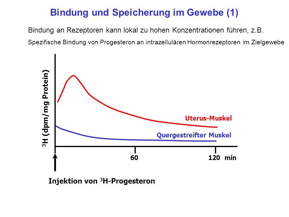 Bindung und Speicherung im Gewebe (1) Bindung an Rezeptoren kann lokal zu hohen Konzentrationen führen, z.B. Spezifische Bindung von Progesteron an in