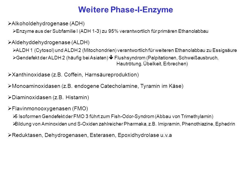 Weitere Phase-I-Enzyme Alkoholdehydrogenase (ADH) Enzyme aus der Subfamilie I (ADH 1-3) zu 95% verantwortlich für primären Ethanolabbau Aldehyddehydro