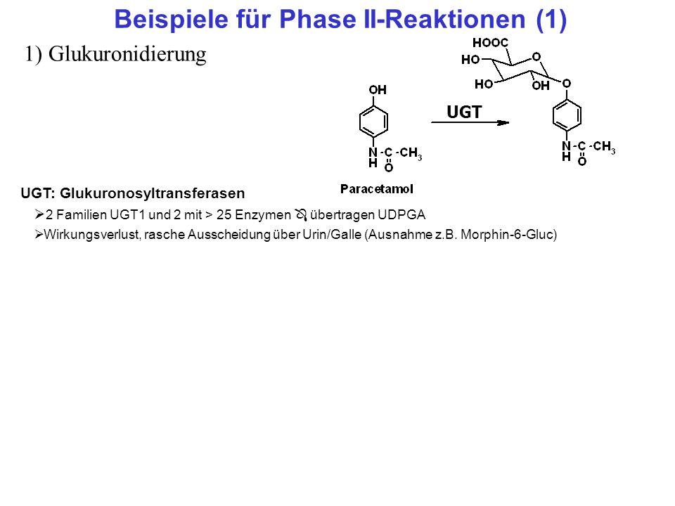 Beispiele für Phase II-Reaktionen (1) 1) Glukuronidierung UGT UGT: Glukuronosyltransferasen 2 Familien UGT1 und 2 mit > 25 Enzymen übertragen UDPGA Wi