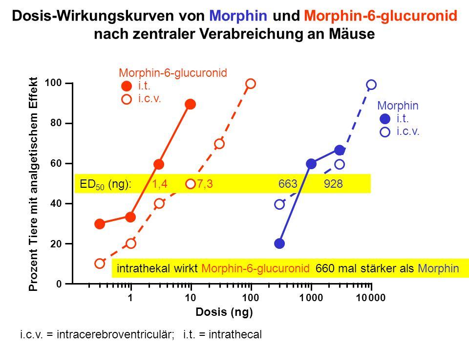 Dosis-Wirkungskurven von Morphin und Morphin-6-glucuronid nach zentraler Verabreichung an Mäuse Morphin i.t. i.c.v. Prozent Tiere mit analgetischem Ef