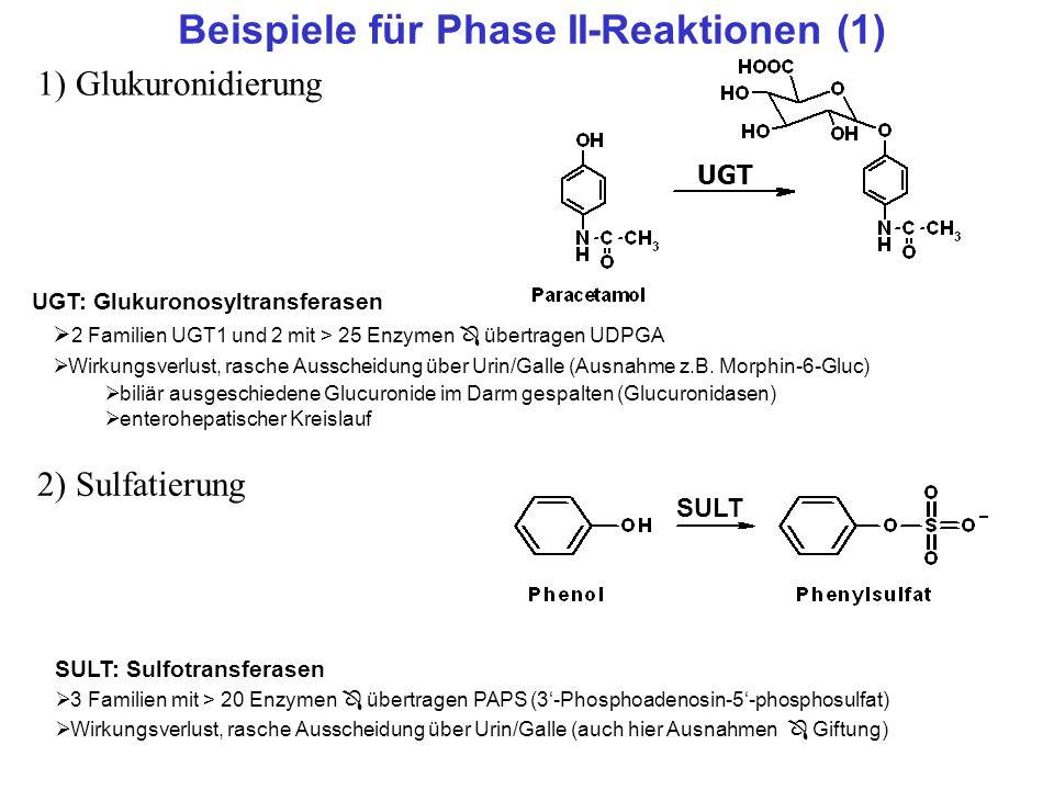 Beispiele für Phase II-Reaktionen (1) 1) Glukuronidierung 2) Sulfatierung UGT UGT: Glukuronosyltransferasen 2 Familien UGT1 und 2 mit > 25 Enzymen übe