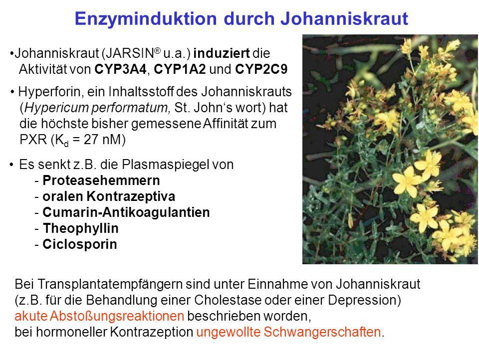 Johanniskraut (JARSIN ® u.a.) induziert die Aktivität von CYP3A4, CYP1A2 und CYP2C9 Es senkt z.B. die Plasmaspiegel von - Proteasehemmern - oralen Kon