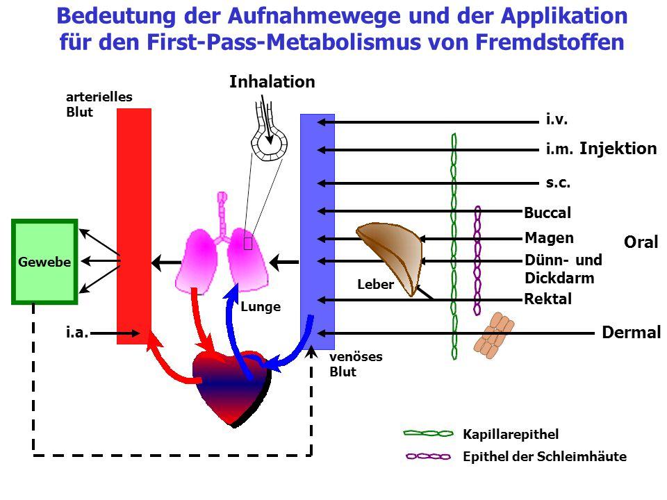 Dermal Rektal Buccal Magen Dünn- und Dickdarm Oral i.v. s.c. i.m. Injektion Gewebe Lunge venöses Blut Leber arterielles Blut Epithel der Schleimhäute