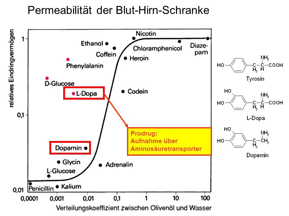 Permeabilität der Blut-Hirn-Schranke Prodrug: Aufnahme über Aminosäuretransporter