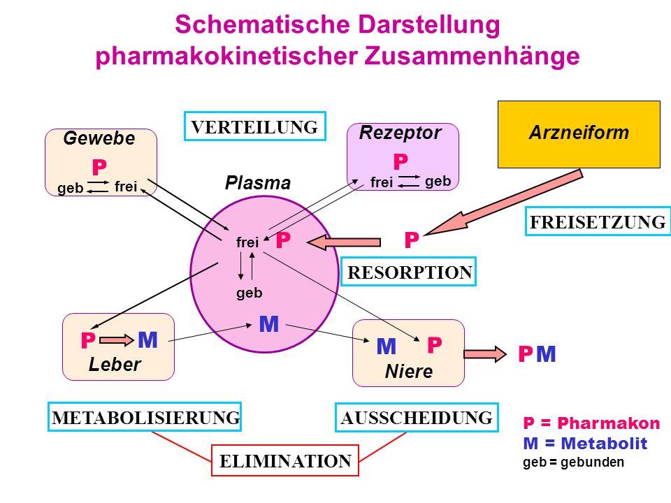 Schematische Darstellung pharmakokinetischer Zusammenhänge Rezeptor Gewebe Leber Niere P Plasma P RESORPTION M METABOLISIERUNG P geb frei VERTEILUNG P