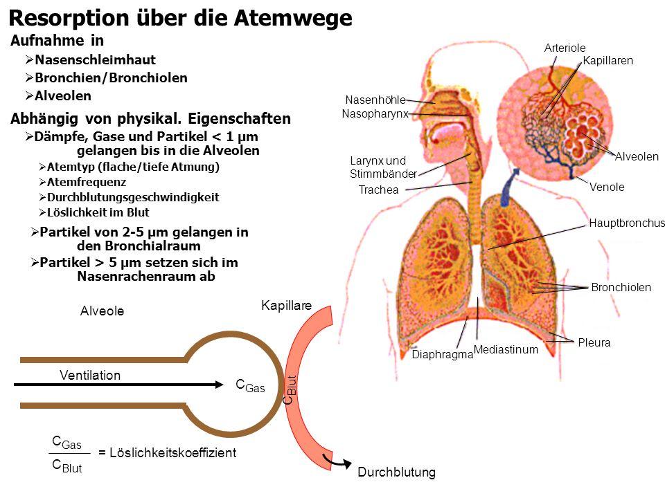 Resorption über die Atemwege Abhängig von physikal. Eigenschaften Dämpfe, Gase und Partikel < 1 µm gelangen bis in die Alveolen Atemtyp (flache/tiefe