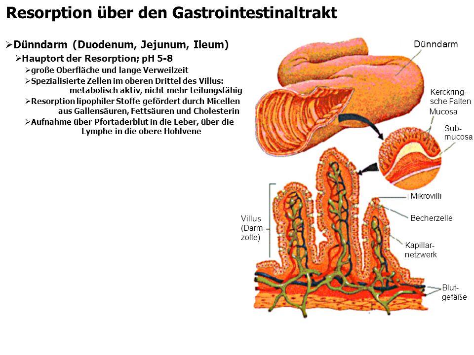 Resorption über den Gastrointestinaltrakt Dünndarm (Duodenum, Jejunum, Ileum) Hauptort der Resorption; pH 5-8 große Oberfläche und lange Verweilzeit S