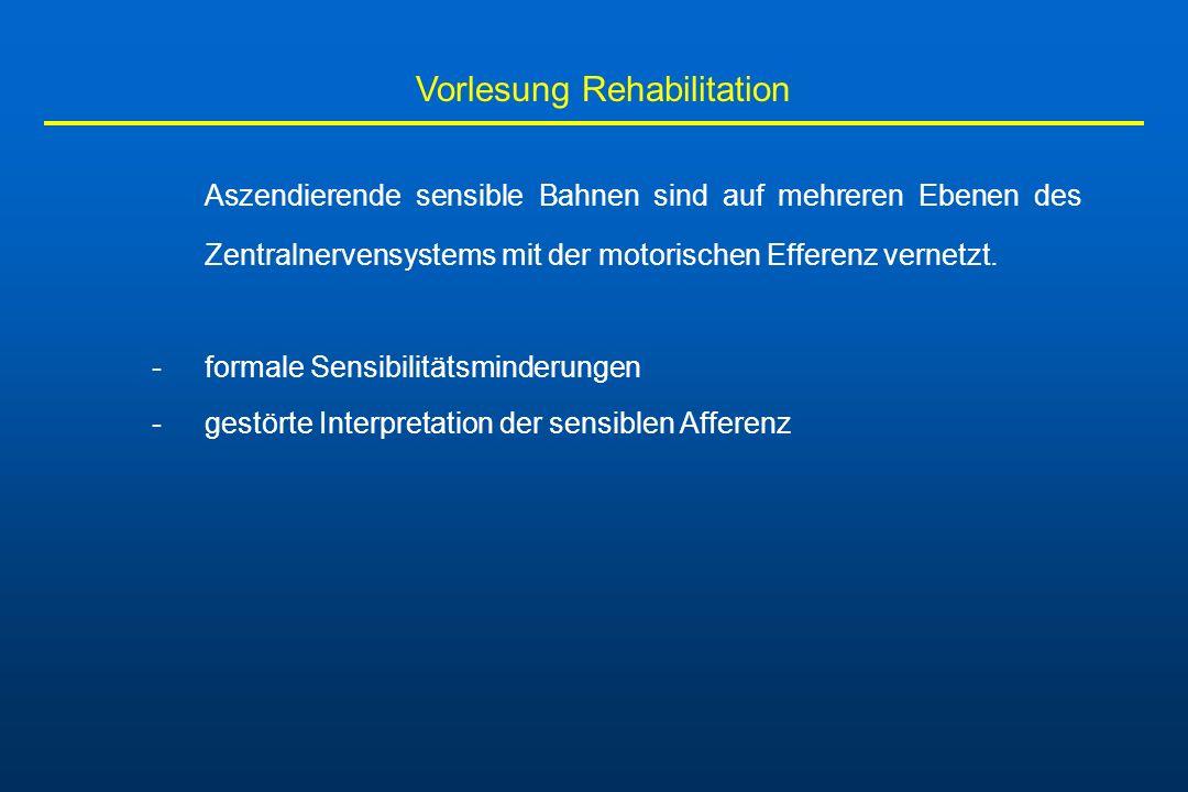Vorlesung Rehabilitation Aszendierende sensible Bahnen sind auf mehreren Ebenen des Zentralnervensystems mit der motorischen Efferenz vernetzt. -forma