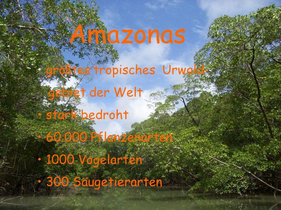 größtes tropisches Urwald- gebiet der Welt stark bedroht 60.000 Pflanzenarten 1000 Vogelarten 300 Säugetierarten