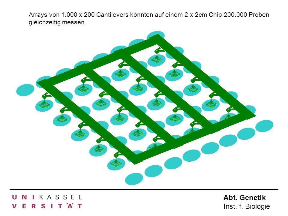 Abt. Genetik Inst. f. Biologie Arrays von 1.000 x 200 Cantilevers könnten auf einem 2 x 2cm Chip 200.000 Proben gleichzeitig messen.