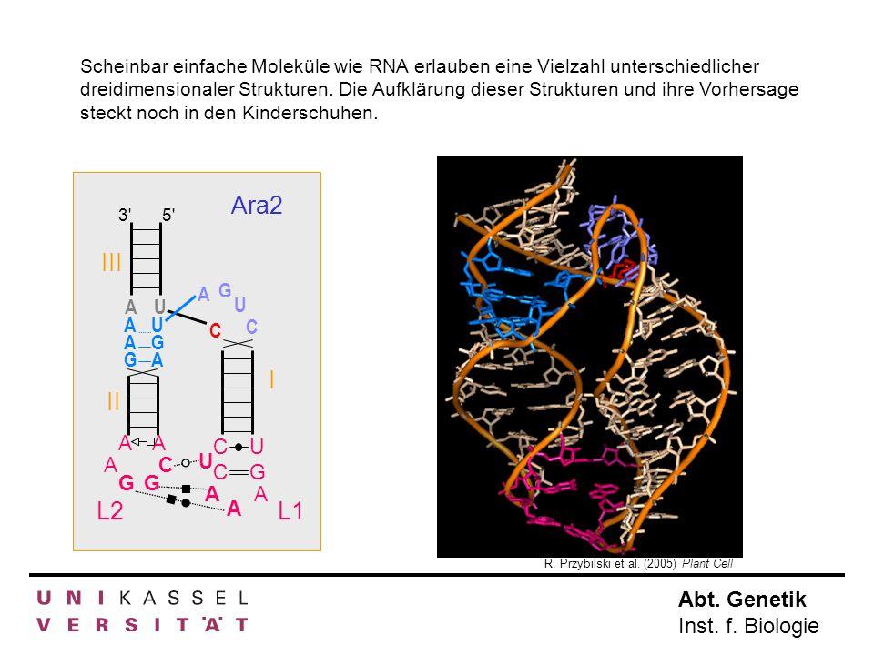 Abt. Genetik Inst. f. Biologie R. Przybilski et al. (2005) Plant Cell Ara2 AU C 3'5' III I II L1L2 AAGAAG UGAUGA C U G A U G A A A C U C AA A GG C Sch