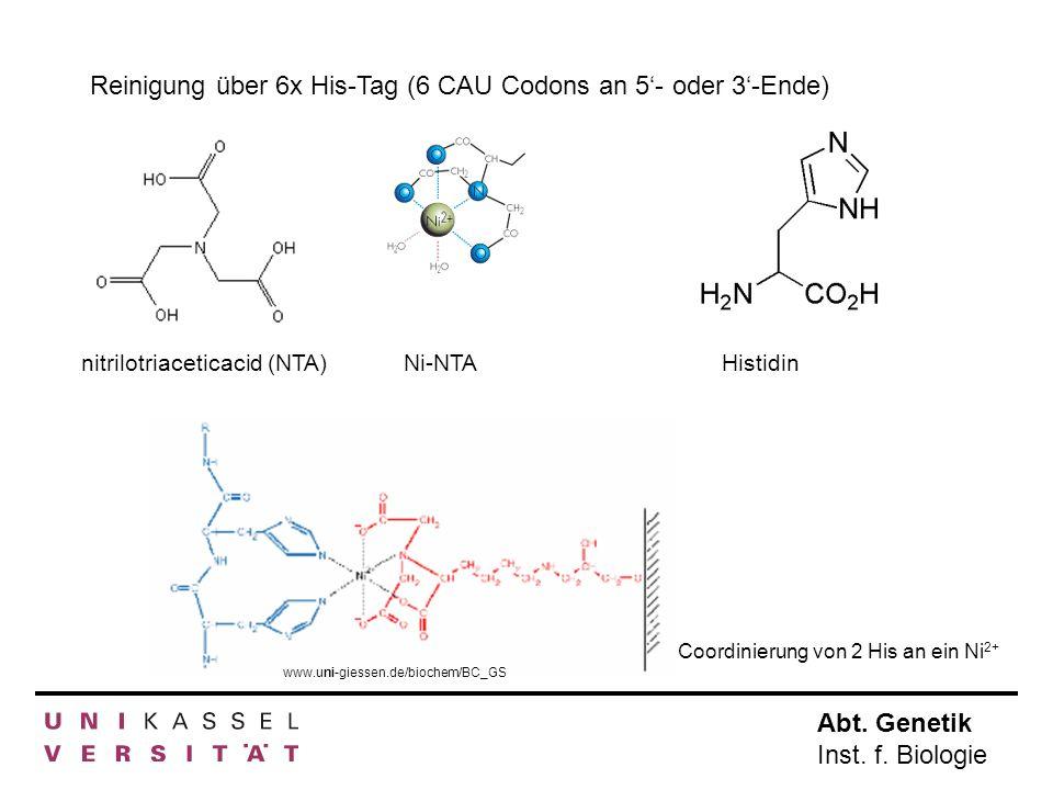 Abt. Genetik Inst. f. Biologie Reinigung über 6x His-Tag (6 CAU Codons an 5- oder 3-Ende) nitrilotriaceticacid (NTA)HistidinNi-NTA Coordinierung von 2