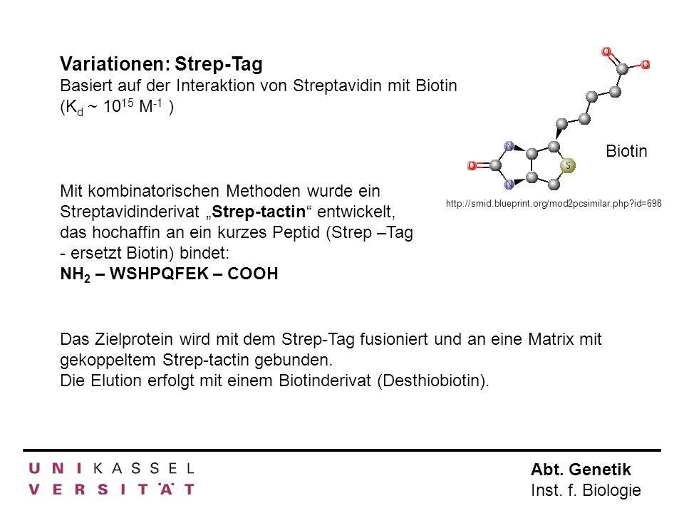 Abt. Genetik Inst. f. Biologie Variationen: Strep-Tag Basiert auf der Interaktion von Streptavidin mit Biotin (K d ~ 10 15 M -1 ) Mit kombinatorischen