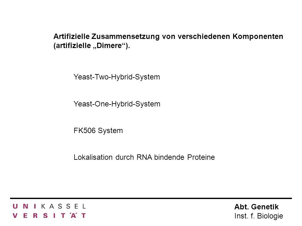 Abt. Genetik Inst. f. Biologie Artifizielle Zusammensetzung von verschiedenen Komponenten (artifizielle Dimere). Yeast-Two-Hybrid-System Yeast-One-Hyb