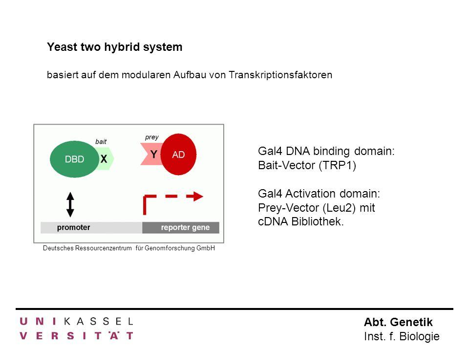 Abt. Genetik Inst. f. Biologie Yeast two hybrid system Deutsches Ressourcenzentrum für Genomforschung GmbH Gal4 DNA binding domain: Bait-Vector (TRP1)