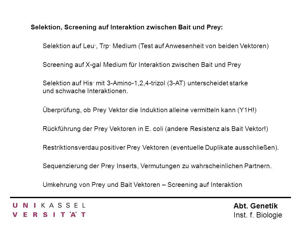 Abt. Genetik Inst. f. Biologie Selektion, Screening auf Interaktion zwischen Bait und Prey: Selektion auf Leu -, Trp - Medium (Test auf Anwesenheit vo
