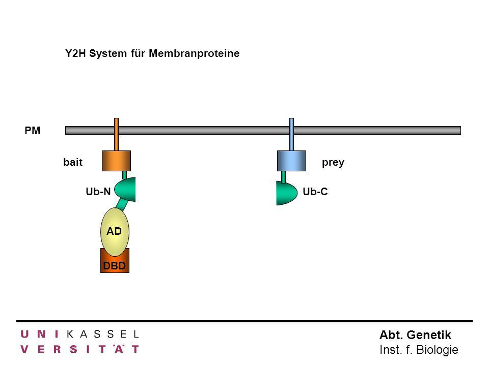 Abt. Genetik Inst. f. Biologie Y2H System für Membranproteine PM AD DBD baitprey Ub-NUb-C