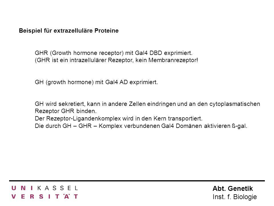 Abt. Genetik Inst. f. Biologie Beispiel für extrazelluläre Proteine GHR (Growth hormone receptor) mit Gal4 DBD exprimiert. (GHR ist ein intrazelluläre