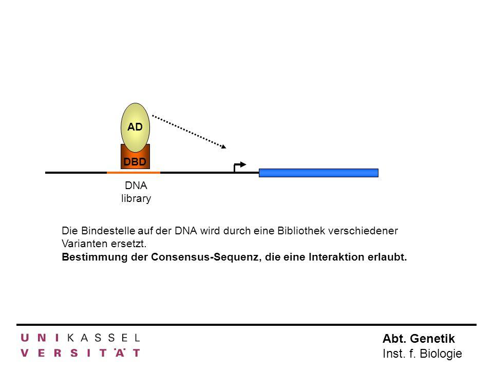 Abt. Genetik Inst. f. Biologie AD DBD DNA library Die Bindestelle auf der DNA wird durch eine Bibliothek verschiedener Varianten ersetzt. Bestimmung d