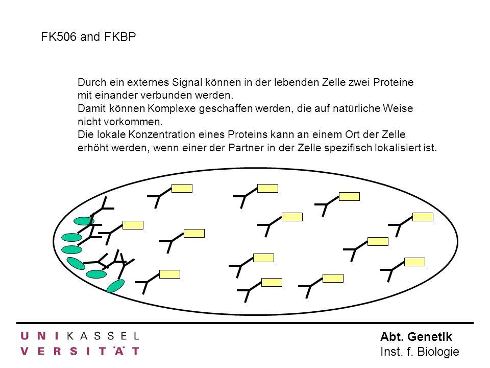 Abt. Genetik Inst. f. Biologie FK506 and FKBP Durch ein externes Signal können in der lebenden Zelle zwei Proteine mit einander verbunden werden. Dami