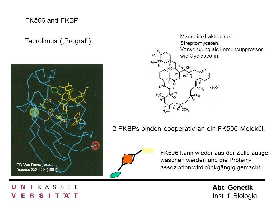 Abt. Genetik Inst. f. Biologie FK506 and FKBP Tacrolimus (Prograf) Macrolide Lakton aus Streptomyceten. Verwendung als Immunsuppressor wie Cyclosporin